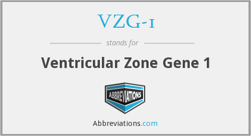 VZG-1 - Ventricular Zone Gene 1