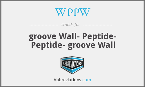 WPPW - groove Wall- Peptide- Peptide- groove Wall