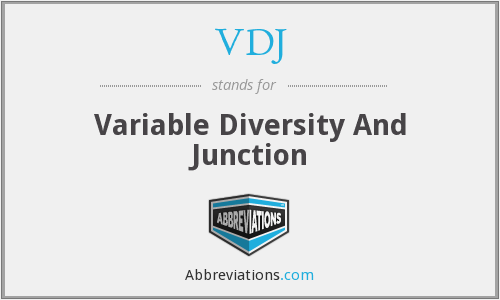 VDJ - Variable Diversity And Junction