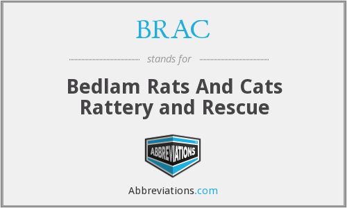 BRAC - Bedlam Rats And Cats Rattery and Rescue