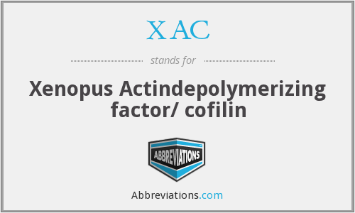 XAC - Xenopus Actindepolymerizing factor/ cofilin