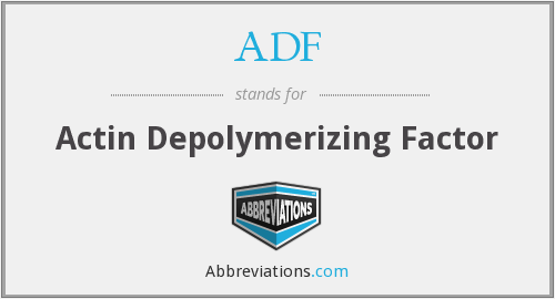 ADF - Actin Depolymerizing Factor
