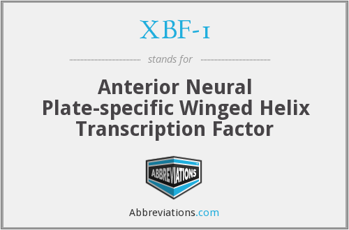 XBF-1 - Anterior Neural Plate-specific Winged Helix Transcription Factor