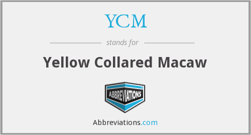 What does YCM stand for?