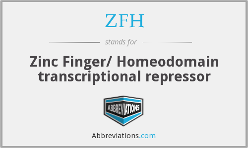 ZFH - Zinc Finger/ Homeodomain transcriptional repressor