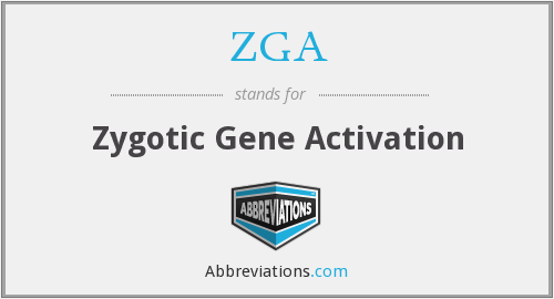 ZGA - Zygotic Gene Activation