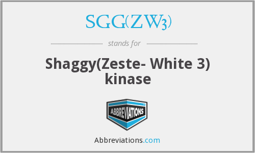 SGG(ZW3) - Shaggy(Zeste- White 3) kinase
