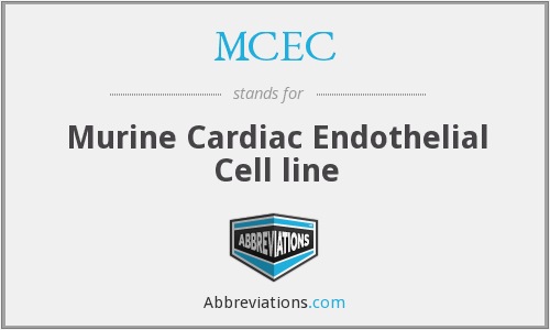 MCEC - Murine Cardiac Endothelial Cell line