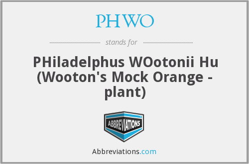 PHWO - PHiladelphus WOotonii Hu (Wooton's Mock Orange - plant)