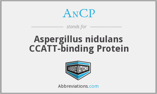 AnCP - Aspergillus nidulans CCATT-binding Protein