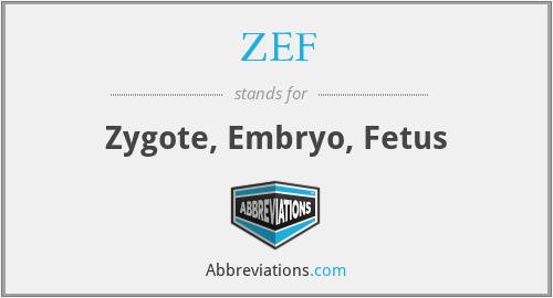 ZEF - Zygote, Embryo, Fetus