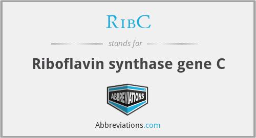 RibC - Riboflavin synthase gene C