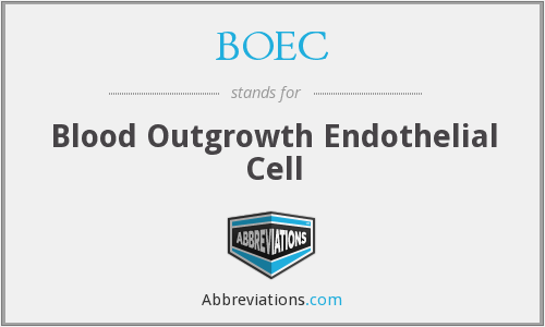 BOEC - Blood Outgrowth Endothelial Cell