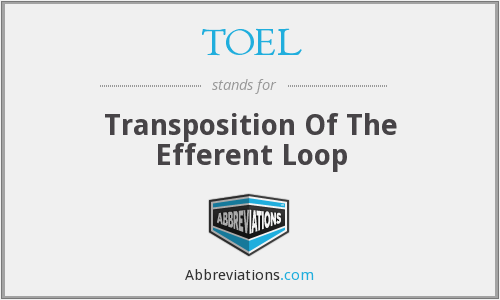 TOEL - Transposition Of The Efferent Loop