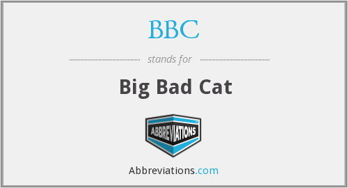 BBC - Big Bad Cat