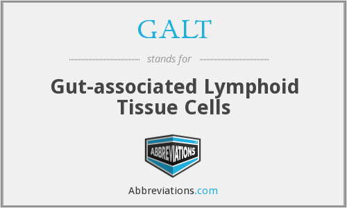 GALT - Gut-associated Lymphoid Tissue Cells