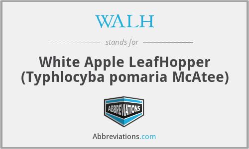 WALH - White Apple LeafHopper (Typhlocyba pomaria McAtee)