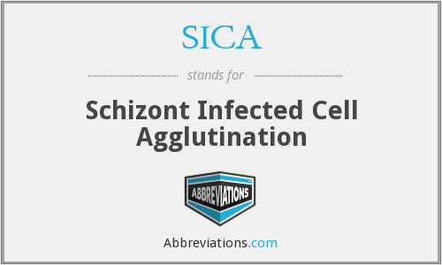SICA - Schizont Infected Cell Agglutination