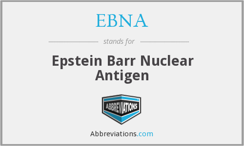 What does EBNA stand for?