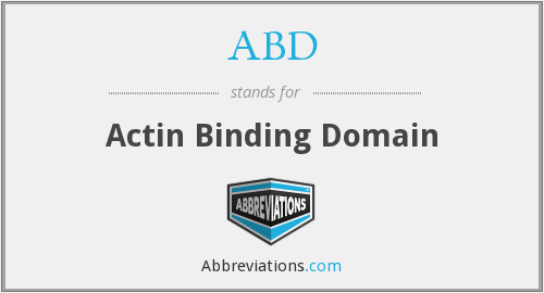 ABD - Actin Binding Domain