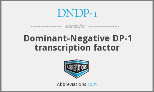 DNDP-1 - Dominant-Negative DP-1 transcription factor