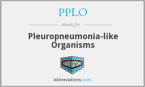 What does PPLO stand for?