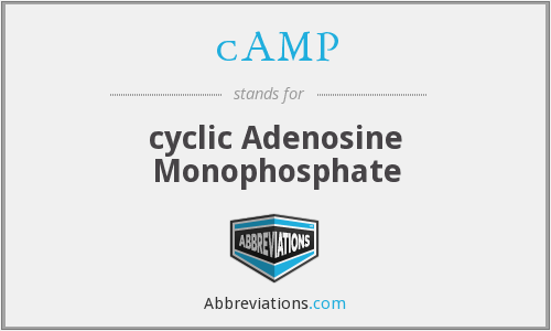 cAMP - cyclic Adenosine Monophosphate