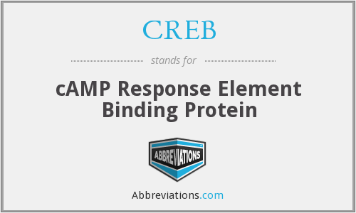 CREB - cAMP Response Element Binding Protein