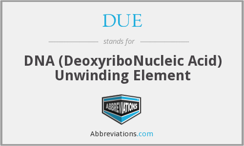 DUE - DNA (DeoxyriboNucleic Acid) Unwinding Element