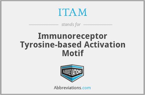 ITAM - Immunoreceptor Tyrosine-based Activation Motif