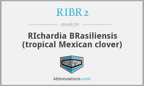 RIBR2 - RIchardia BRasiliensis (tropical Mexican clover)