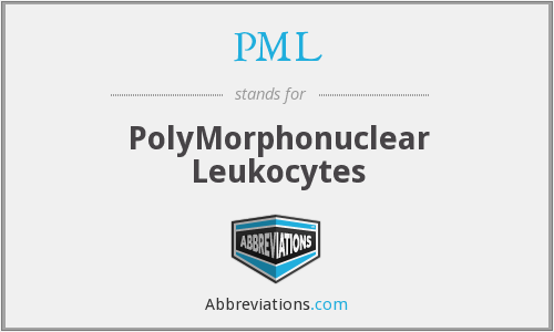 PML - PolyMorphonuclear Leukocytes