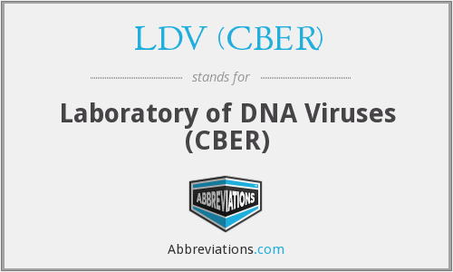 What does LDV (CBER) stand for?