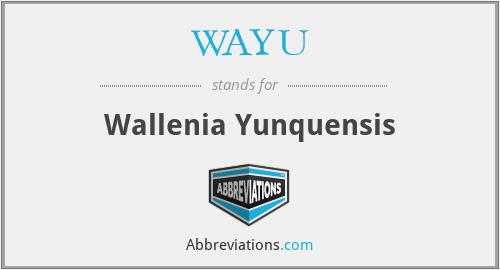 WAYU - Wallenia Yunquensis