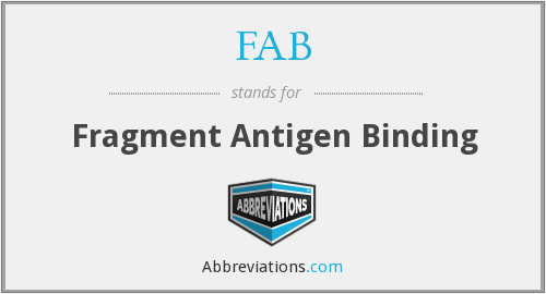 FAB - Fragment Antigen Binding