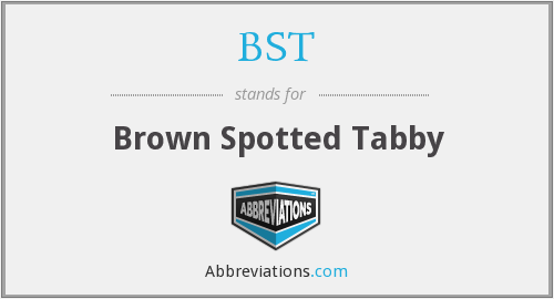 BST - Brown Spotted Tabby