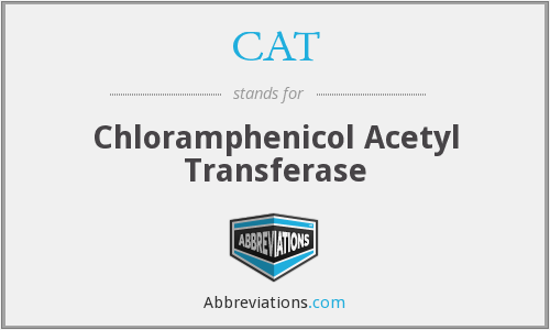 CAT - Chloramphenicol Acetyl Transferase