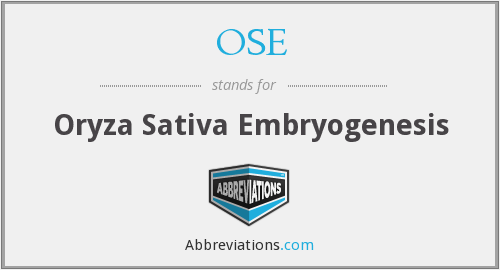 OSE - Oryza Sativa Embryogenesis